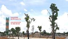 Đất Nền Khu đô thị Danko City Thái Nguyên