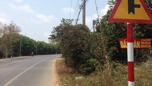 Không người trông coi cần bán 4.039 m2 đất có mặt tiền đường 130m, sâu hơn 30m, xã Láng Dài nằm đối diện Sân bay Ho Tram