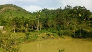 Cần chuyển nhượng 5.000 m2 đất thổ cư làm trang trạng nhà vườn tại tỉnh Hòa Bình
