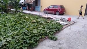 Chính chủ cần tiền nên bán nhanh lô đất trong tháng này TDP Chính Trung, Trâu Qùy, Gia Lâm