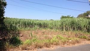 Bán 810m2 có 100m2 đất ở đối diện Sân bay Hồ Tràm/Lộc An